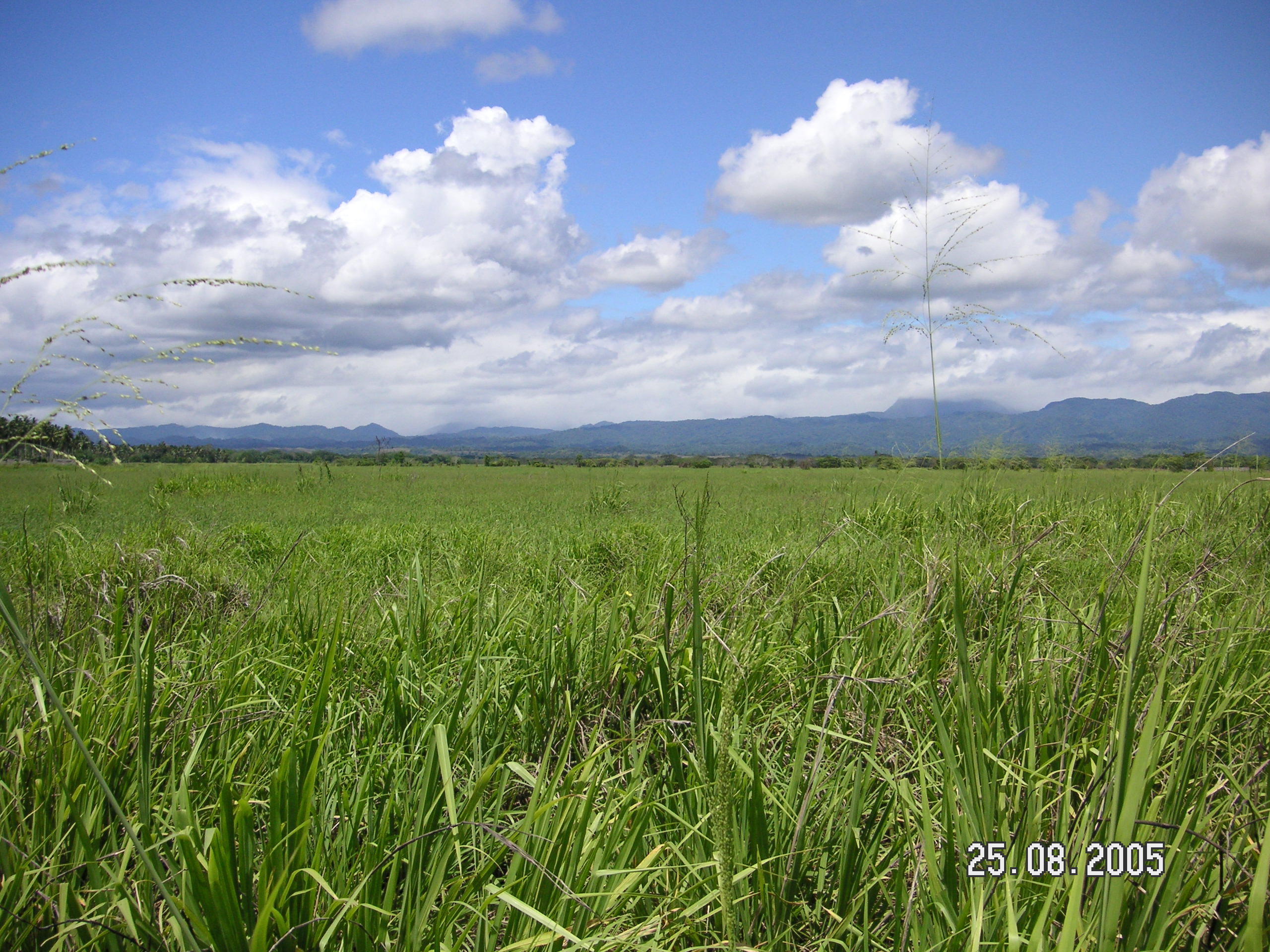 Guadalcanal Plains 2008