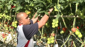 A Timorese seasonal worker in Australia