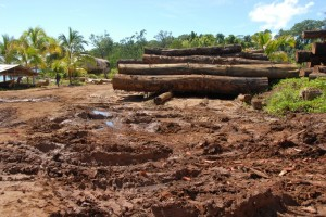 Logging in Marovo, Solomon Islands