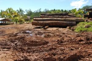 Logging in Marovo, Solomon Islands
