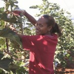 Benefits of the Seasonal Worker Program: an employer's perspective
