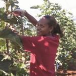 Benefits of the Seasonal Worker Program: an employer's perspective