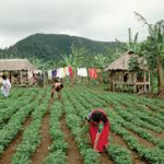Agriculture in Samoa: changing farmers mindset is only one part of the solution