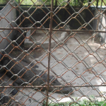 Wildlife held in unsafe captivity at a Vietnamese national park supported by the Australian aid program