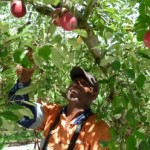Issues with the Seasonal Worker Program: an employer's perspective