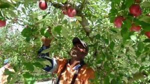 1. jacob kailles picking