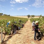 Reforming the Seasonal Worker Program: suggestions from an employer