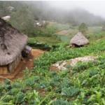 Rural development in Timor-Leste: some alternatives to decentralisation