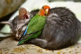 Cat-parrot