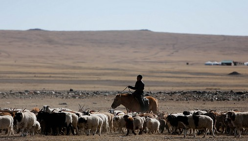 A cautionary tale from Mongolia