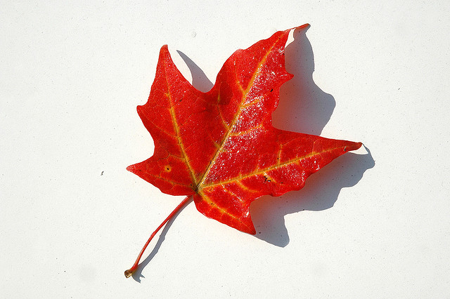 Canada maple leaf (image: Flickr/Doug)