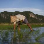 Can food security reinvigorate the G20's development agenda?