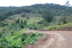 Public road through the centre of the Natoavatu Estate showing steep, forested hills either side (Ellsmoor/Rosen)