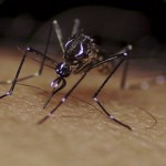 Zika – a new public health emergency?