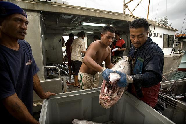 Tuna fishing in Apia, Samoa (Flickr/ADB)