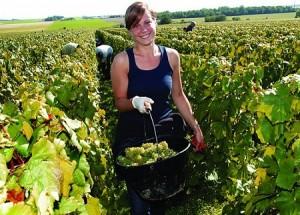 grape-carrier