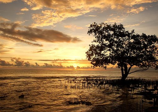 Aid for climate change adaptation in the Pacific