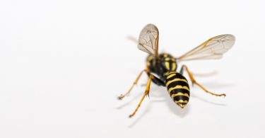 Close Nature Insect Wasp Macro Animals