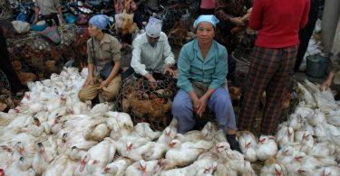 Women selling poultry, Hanoi, Vietnam 2005 (Lorrie Graham/DFAT photolibrary)