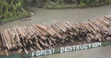 Trees felled by Rimbunan Hijau waiting to be loaded onto a ship (Esperanza A Greenpeace/Flickr/CC BY-NC-ND 2.0)
