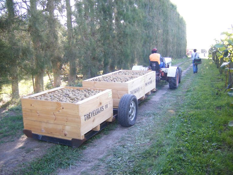 Kiwifruit being transported from a farm (Robert Engberg/Flickr/CC BY 2.0)