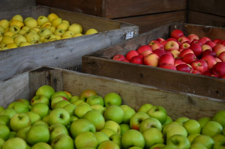 Bins of apples at Otherwood Orchards, South Australia (Apple and Pear Australia Ltd/Flickr/CC BY 2.0)