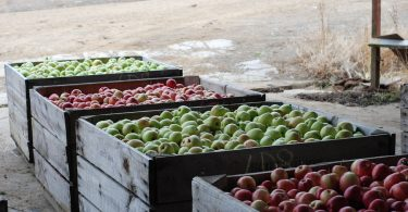 Apple farm (Nat Tung/Flickr/CC BY-NC 2.0)