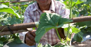 A Cambodian cucumber farmer participating in the MASE project (Credit: iDE)