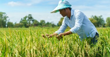 A Cambodian farmer (Credit: CAVAC/DFAT)