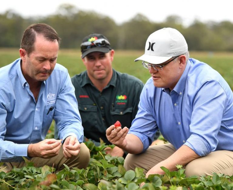 PM Scott Morrison made his backpacker reform announcements on a strawberry farm in Queensland (Credit: AAP/Dan Peled)