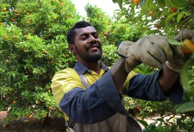 Participant in the Seasonal Worker Programme (Credit: DFAT/Flickr CC BY 2.0)