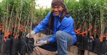 Participant in Australia's Seasonal Worker Programme (Credit DFAT Flickr CC BY 2.0)