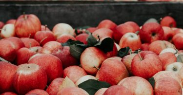 Apples are one of many late summer crops that rely on seasonal workers for harvesting (Credit: Joanna Nix on Unsplash)