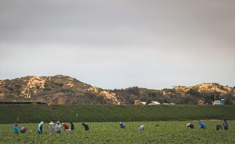 Temporary migrant workers make up the bulk of the seasonal workforce on farms in developed countries (Tony Webster/ Flickr CC BY-SA 2.0)
