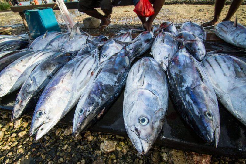 Tuna for sale at Auki market, Malaita Province, Solomon Islands (Filip Milovac/WorldFish/Flickr CC BY-NC-ND 2.0)