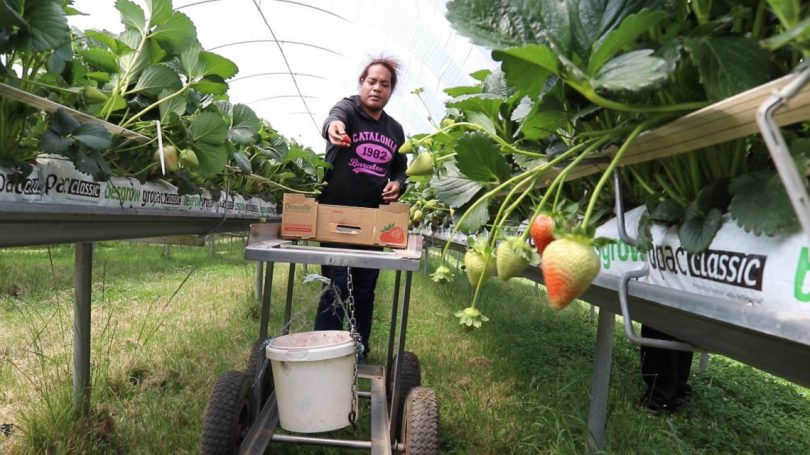 Governance of the Seasonal Worker Programme in Australia and sending countries