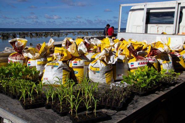 Seedlings and supplies for families to start kitchen gardens (TTM in Nauru).