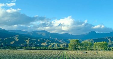 Vineyard in the Wairau Valley, Marlborough, October 2020
