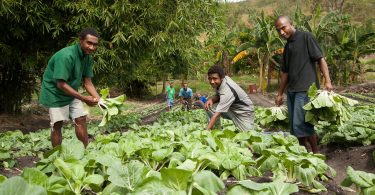 Food insecurity and hunger is a widespread problem in Papua New Guinea.