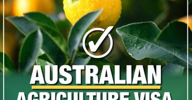"""Close-up photograph of an orange on a tree. There is text over the photo which reads """"Australian Agriculture Visa. The Nationals for Regional Australia."""""""