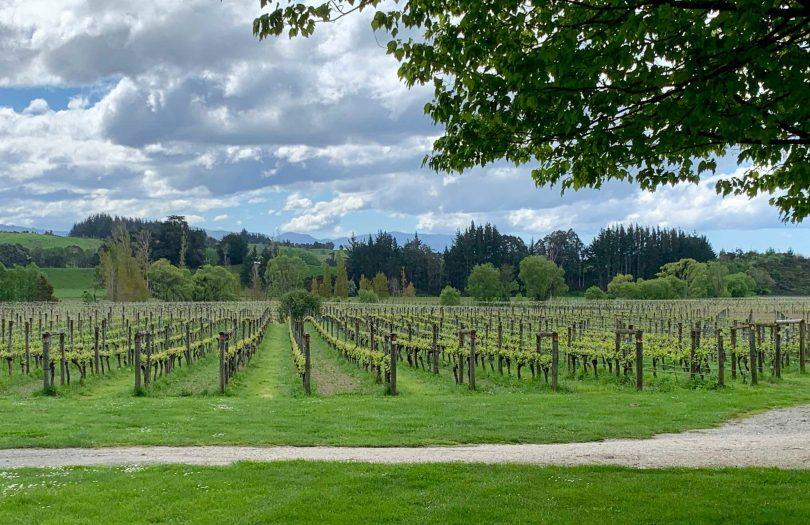 Neudorf Vineyard, Upper Moutere, NZ (Richard Bedford)