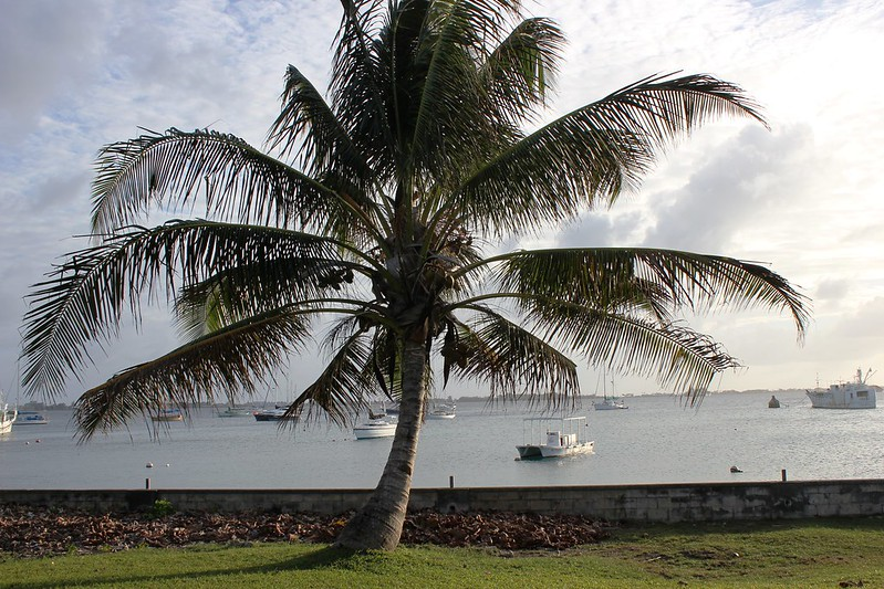 Photograph of a palm tree behind which is a low brick wall and a harbour full of small sailing vessels, taken in Majuro in the Marshall Islands.