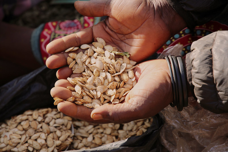 Close up photograph of cupped hands holding dried pumpkin seeds.